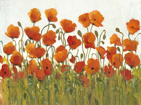 Rows of Poppies I by Timothy O'Toole art print