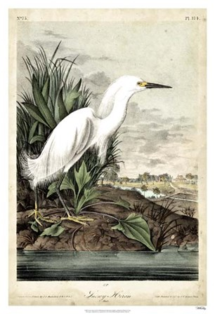 Snowy Heron by John James Audubon art print