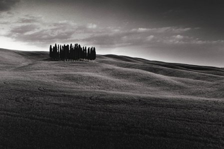 Cypresses and Rolling Hills by Michael Hudson art print