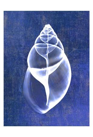 Achatina Shell (indigo) by Bert Myers art print