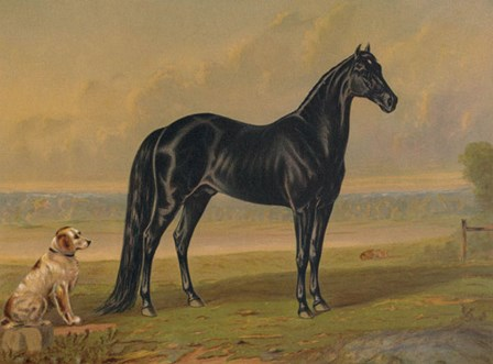 America's Renowned Stallions, c. 1876 I by Vintage Reproduction art print