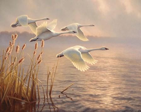 Elegant Migration by Greg Alexander art print