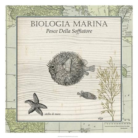 Biologia Marina II by Vision Studio art print