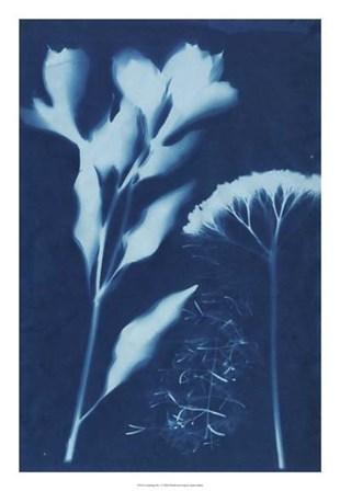 Cyanotype No.15 by Jenna Guthrie art print