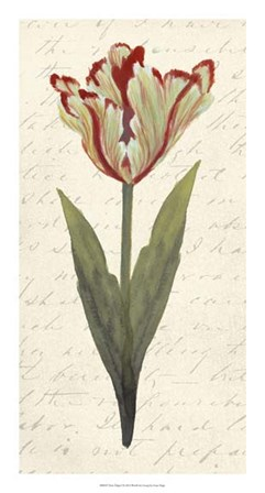 Twin Tulips I by Grace Popp art print