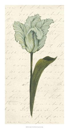 Twin Tulips V by Grace Popp art print