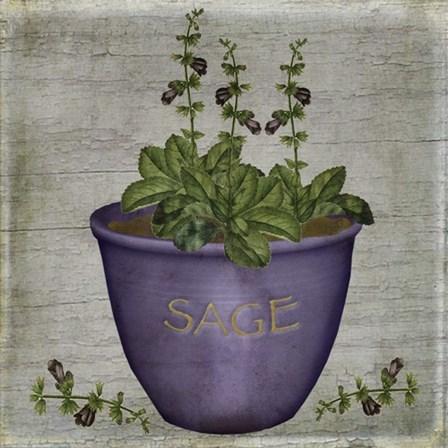 Herb Sage by Beth Albert art print