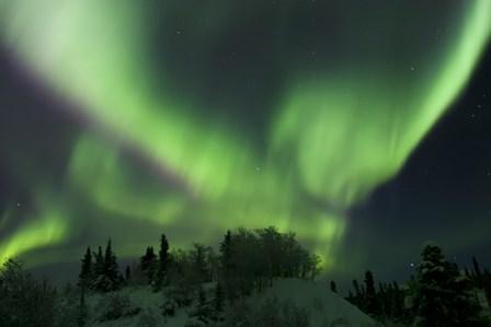 Aurora Borealis Takes Flight by Joseph Bradley/Stocktrek Images art print