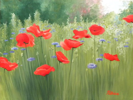 Backyard Poppies by Patrice Procopio art print