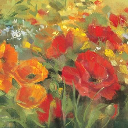 Oriental Poppy Field I by Carol Rowan art print