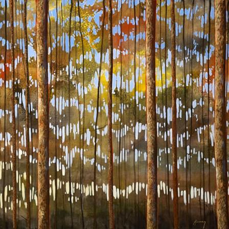 Tarnished Wood by Shawn Meharg art print