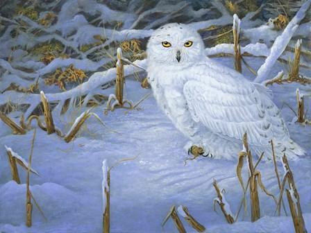 Incoming Snowy Owl by Carol Decker art print