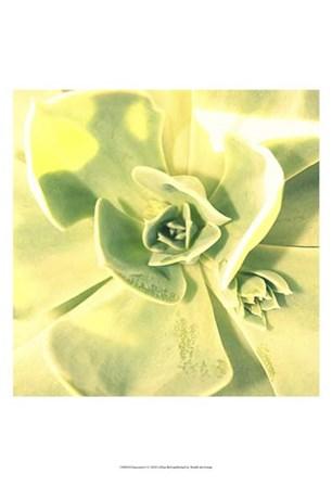 Succulent I by Lillian Bell art print