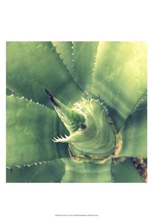 Succulent II by Lillian Bell art print