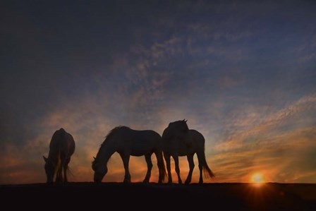 Camargue Sunrise by PHBurchett art print