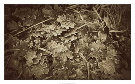 Autumn Leaves by Lillian Bell art print