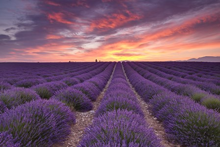 Sunrise over Lavender by Michael Blanchette Photography art print