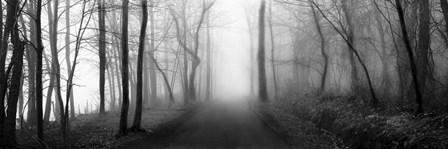 Woodland Walk by Erin Clark art print