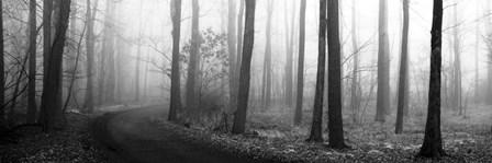 Forest Path by Erin Clark art print