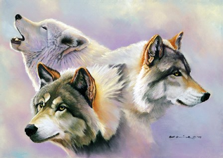 Wolves are Forever by Bob Quick art print