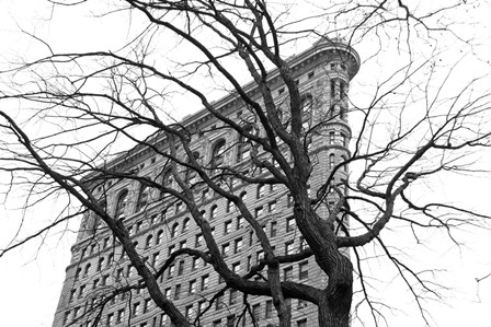 Flatiron with Tree (b/w) by Erin Clark art print