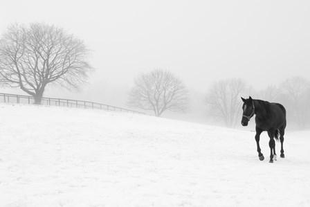 Walking In Fog by Erin Clark art print