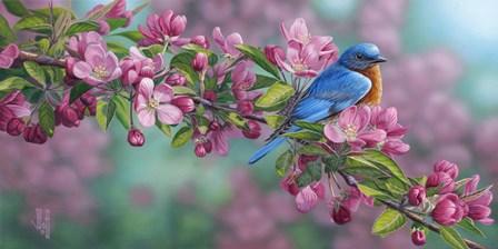 Garden Sapphire - Bluebird by Jeffrey Hoff art print