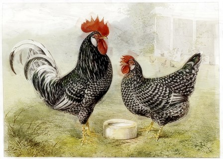 Roosters by Vintage Apple Collection art print