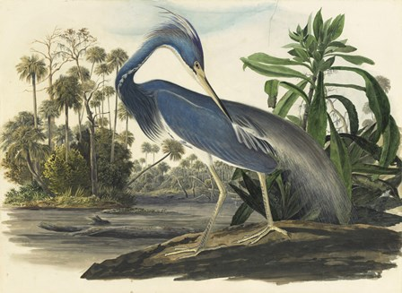 Blue Heron by Vintage Apple Collection art print