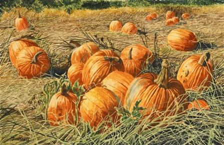 Pumpkin Harvest by Michael Davidoff art print
