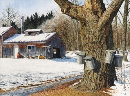 Sugarhouse Near Becket by Michael Davidoff art print