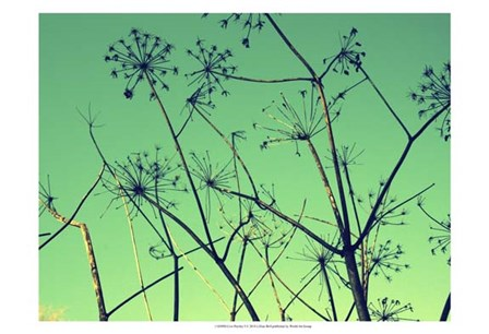 Cow Parsley I by Lillian Bell art print