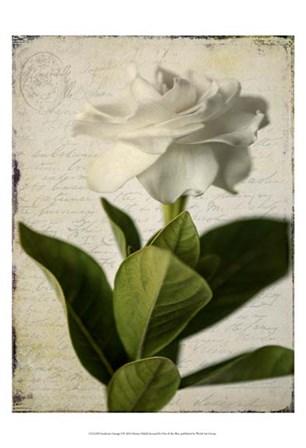 Gardenia Grunge I by Honey Malek art print