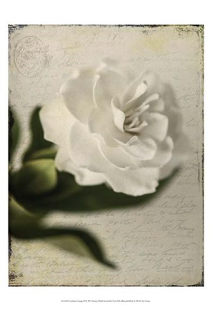 Gardenia Grunge II by Honey Malek art print