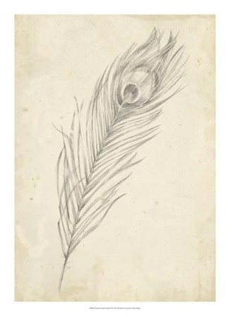 Peacock Feather Sketch II by Ethan Harper art print
