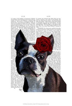 Boston Terrier with Rose on Head by Fab Funky art print