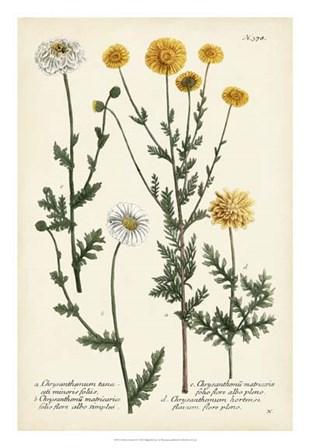 Saffron Garden IV by Joseph Weinmann art print
