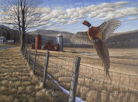 Pheasant by Bruce Dumas art print