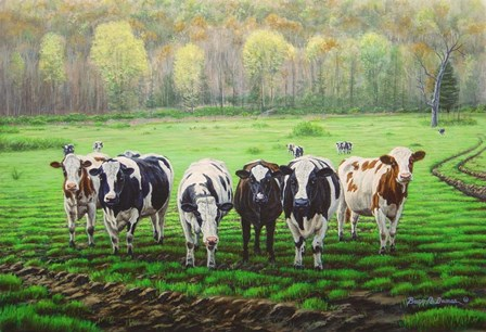 Curious Cows by Bruce Dumas art print