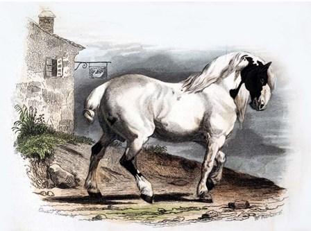Horse II by Georges-Louis Leclerc, Comte de Buffon art print