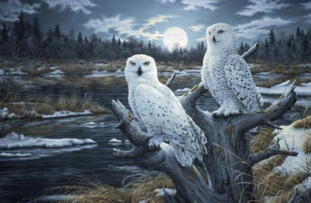 Snowy Owls by Jeff Tift art print
