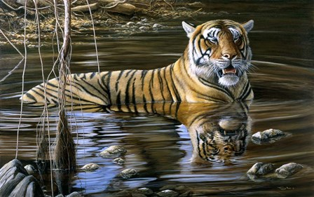 Cooling Off Bengal Tiger by Dr. Jeremy Paul art print