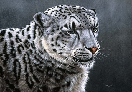 Snow Leopard by Dr. Jeremy Paul art print
