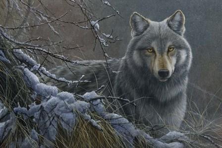 Grey Wolf by Dr. Jeremy Paul art print