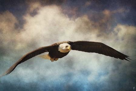 Coming Home Bald Eagle by Jai Johnson art print