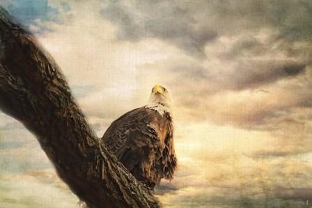 Her Majesty Bald Eagle by Jai Johnson art print
