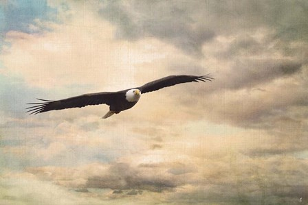 High Flyer Bald Eagle by Jai Johnson art print