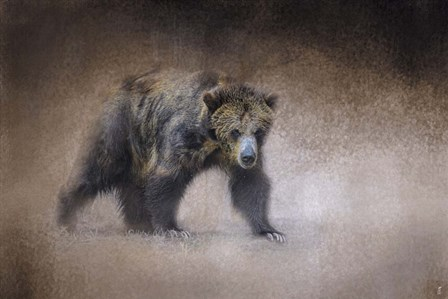 Young Grizzly Bear by Jai Johnson art print