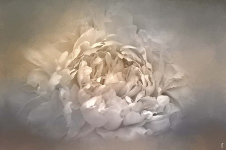 Blushing Silver And Gold Peony by Jai Johnson art print