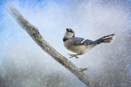 Bluejay In The Snow by Jai Johnson art print